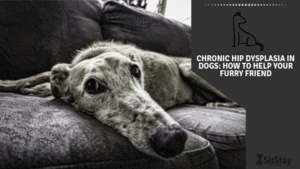 Chronic Hip Dysplasia in Dogs: How to Help Your Furry Friend