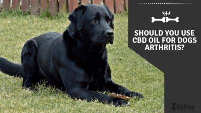 Should you use CBD oil for dogs arthritis?