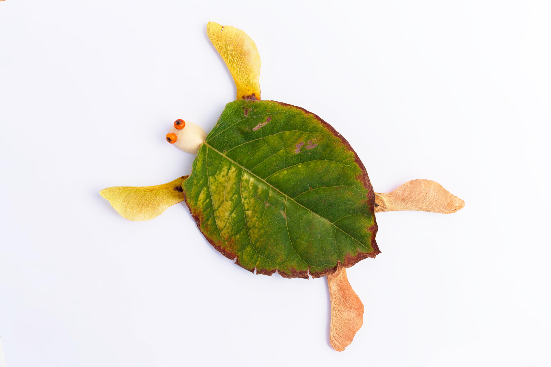 Un collage de tortue en feuilles d'automne