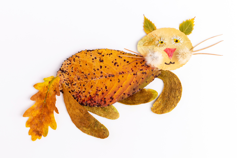Collage de chat en feuilles d'automne