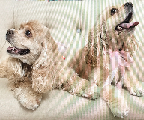 Sugar and Rosie