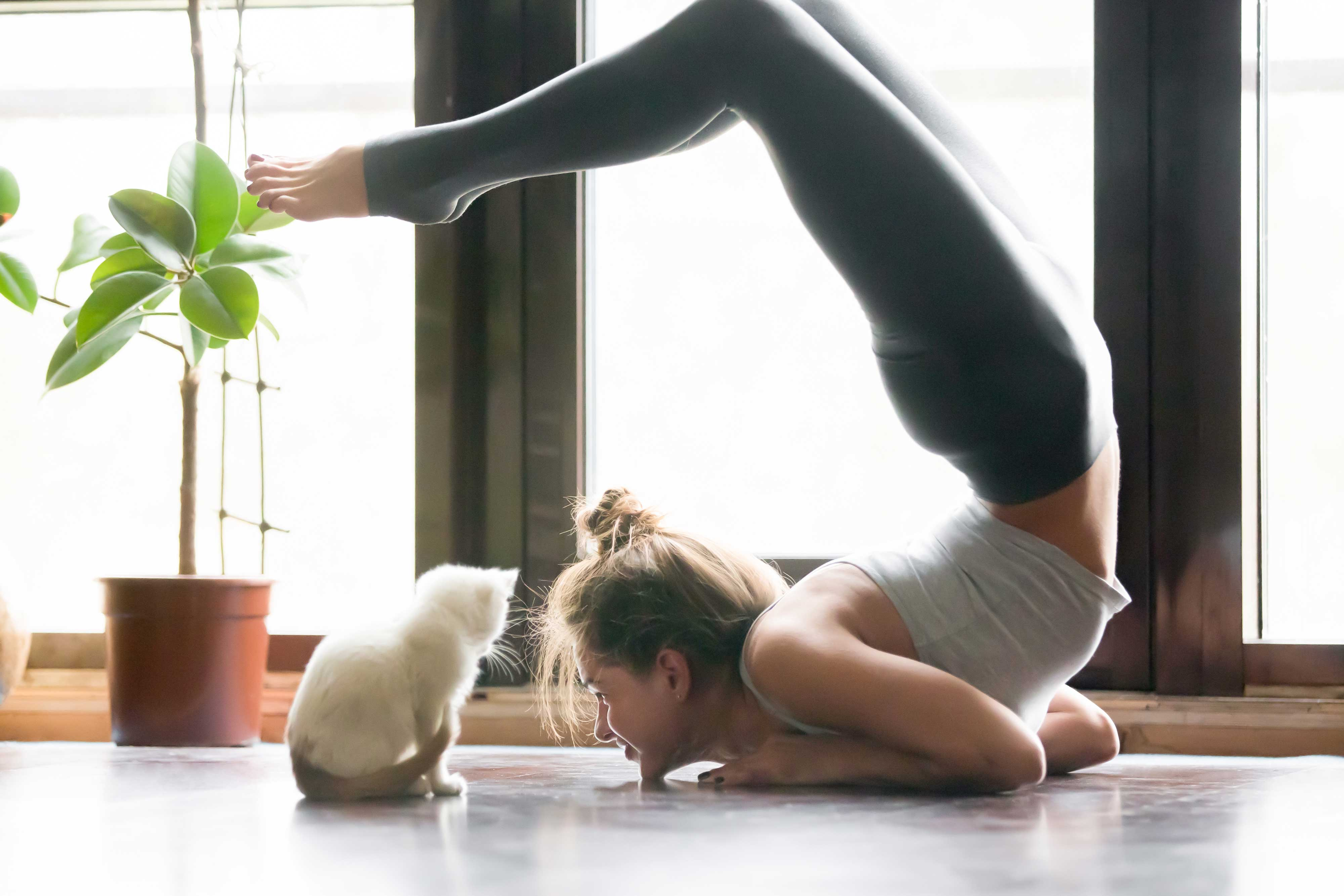 Women Practicing Yoga Indoors With Her Cat