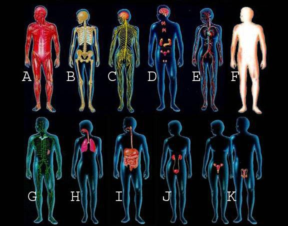 11 Bodily Systems