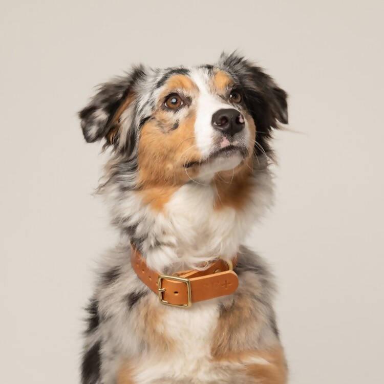 eco leather tan dog collar