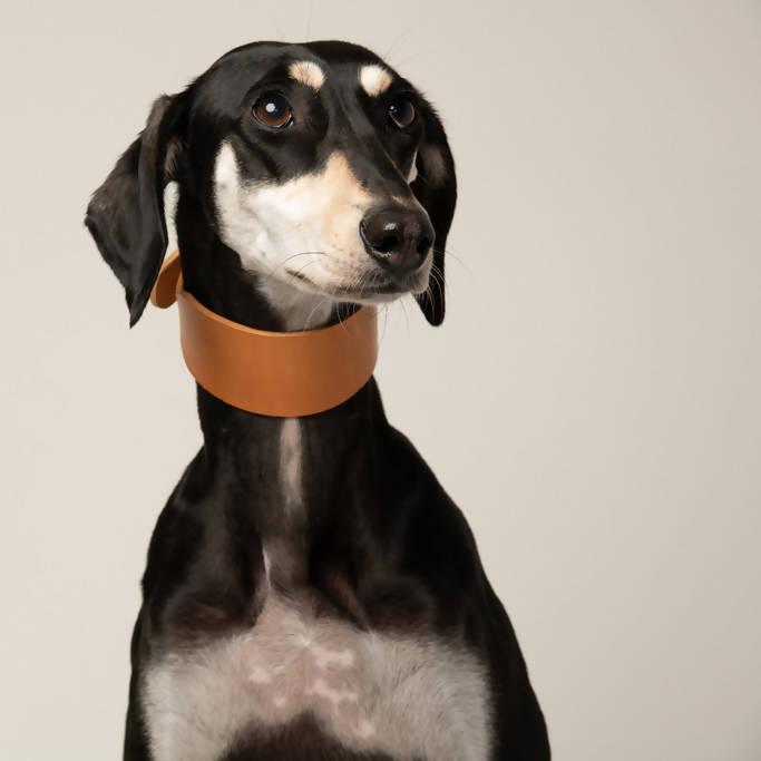 sighthound natural dog collar