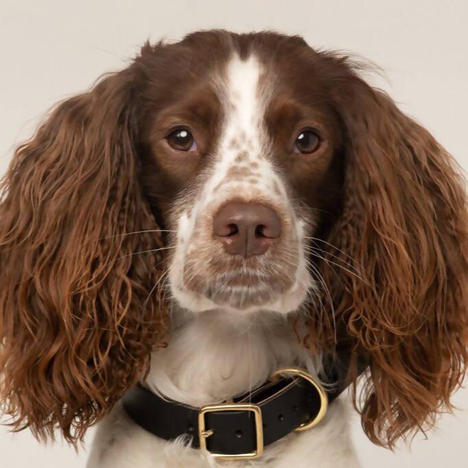 eco leather artisan black dog collar