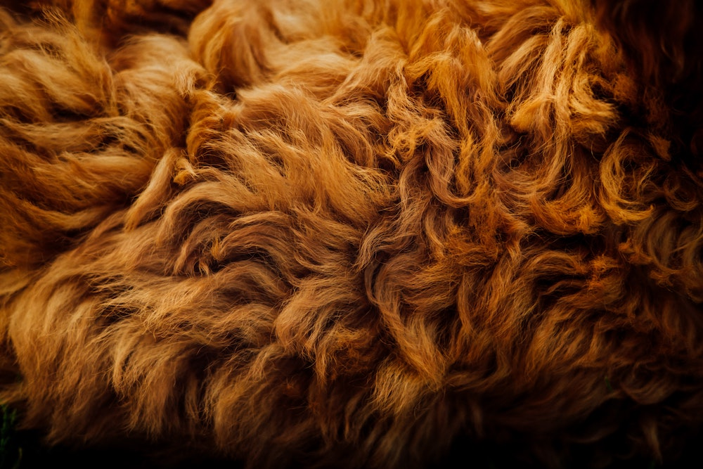 Curly Brown Dog Fur