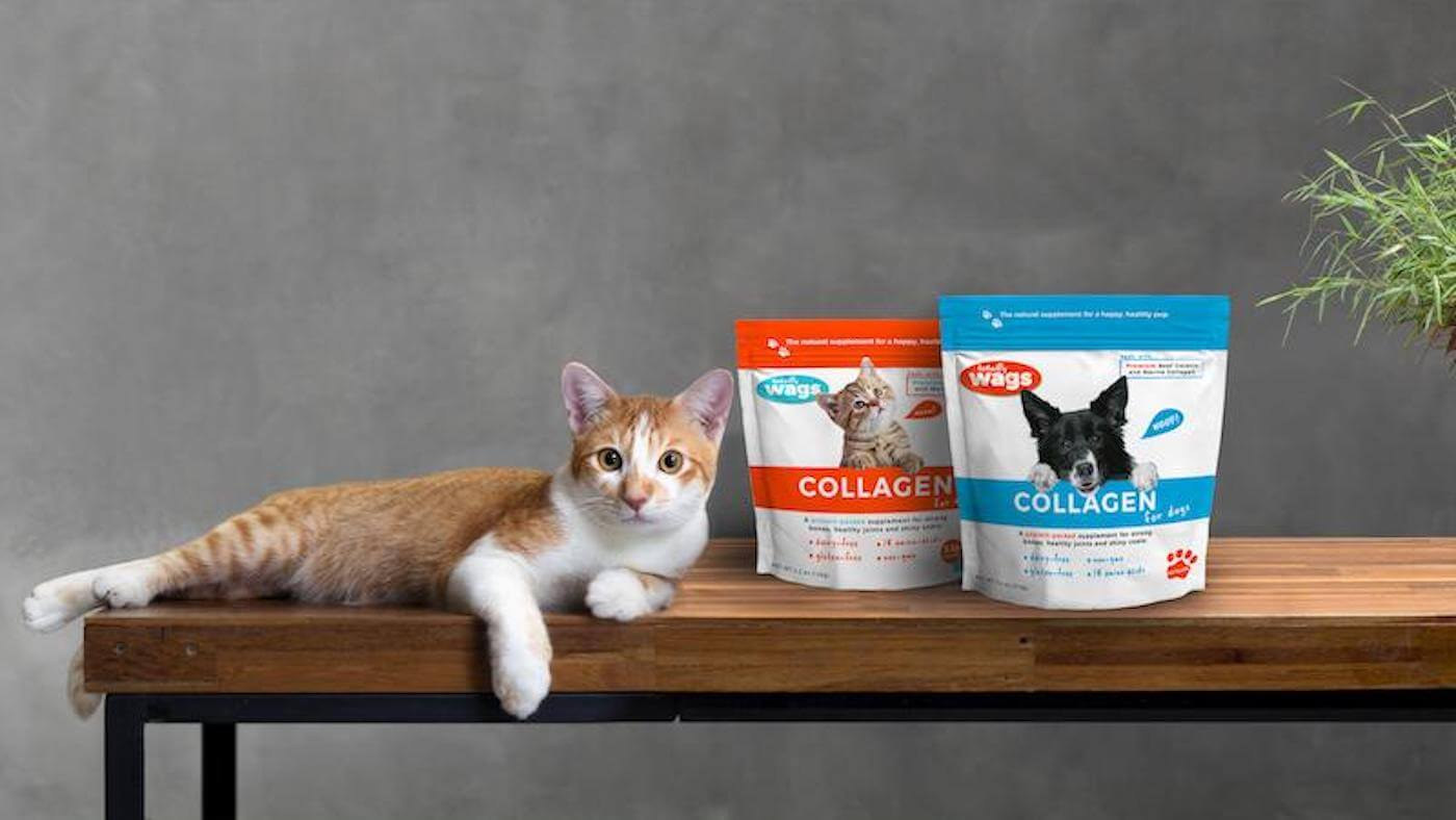 Cat with Totally Wags Collagen