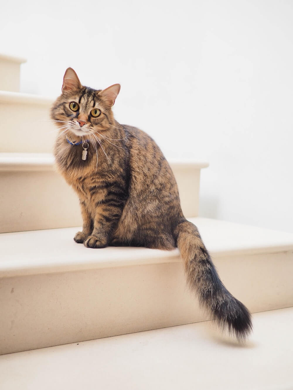 Long haired cat on stairs