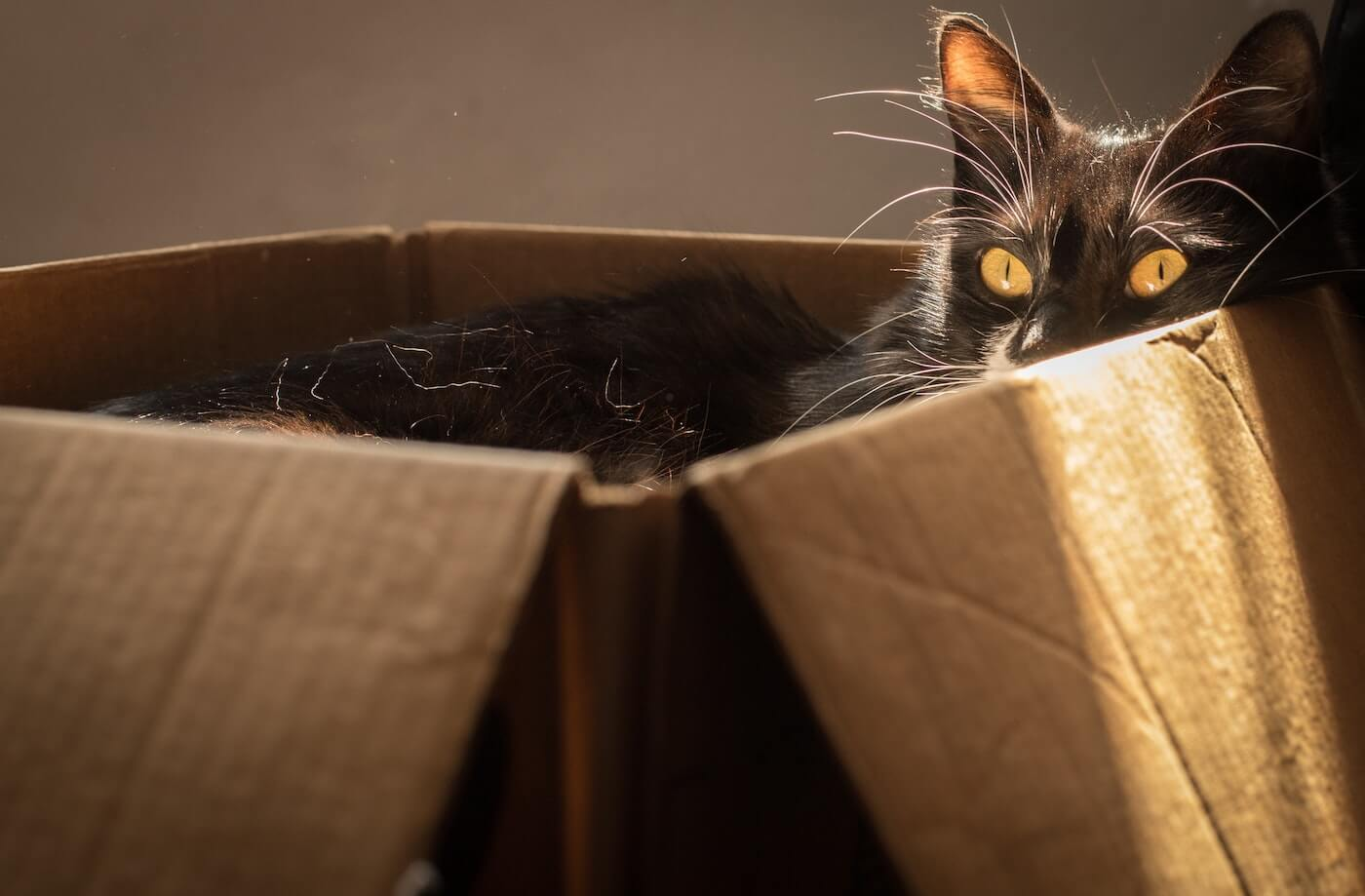 Black cat hiding in a cardboard box