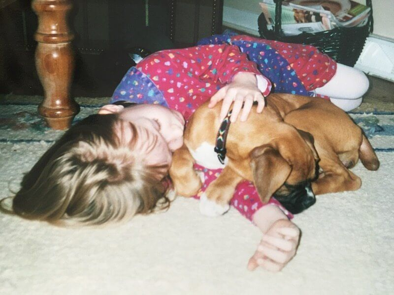 Little girl with sleeping boxer puppy