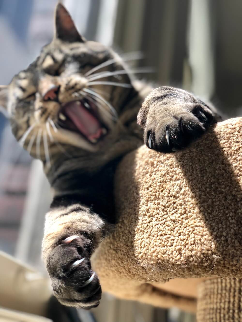 Tabby cat clawing at scratching post