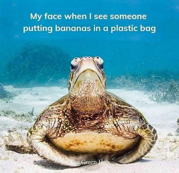Reduce Plastic Waste: Image @anitafromaustralia